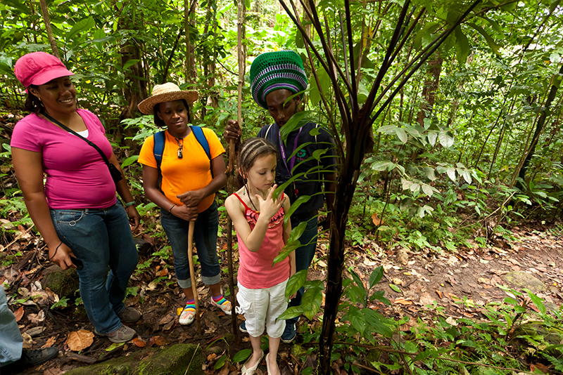 St. Lucia tours - Nature tours