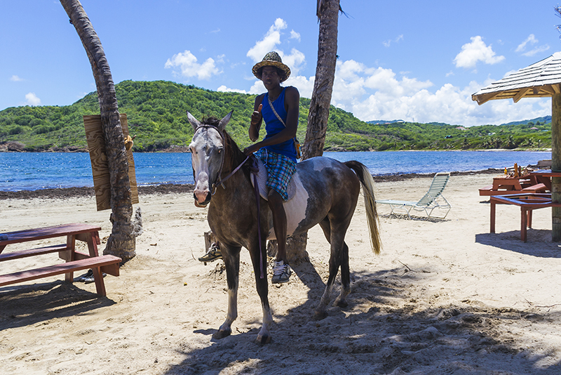 St. Lucia tours - Horse Back riding