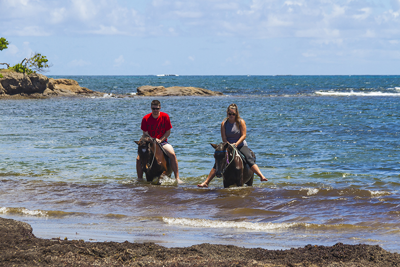 St. Lucia tours - Horse Back riding swimming in Atlantic