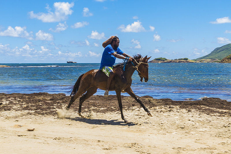 St. Lucia tours - Horse Back riding locals