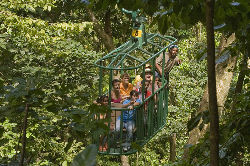 St. Lucia Tours - Rain forest sky ride bird watching
