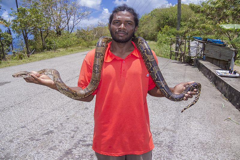 St. Lucia Tours - Snake man Boa Constrictor